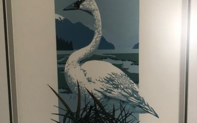"""""""Trumpeter Swan"""" by A. Slattery"""